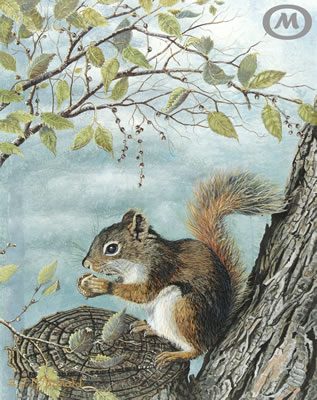 Misty_Retreat-Squirrel400