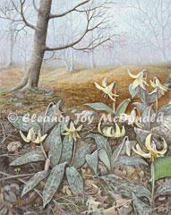 woodland_whildflowers-left_240