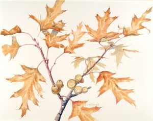 Burnished Branch