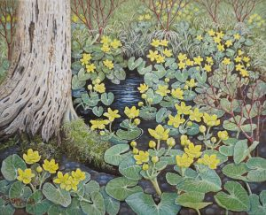 Marsh Marigolds